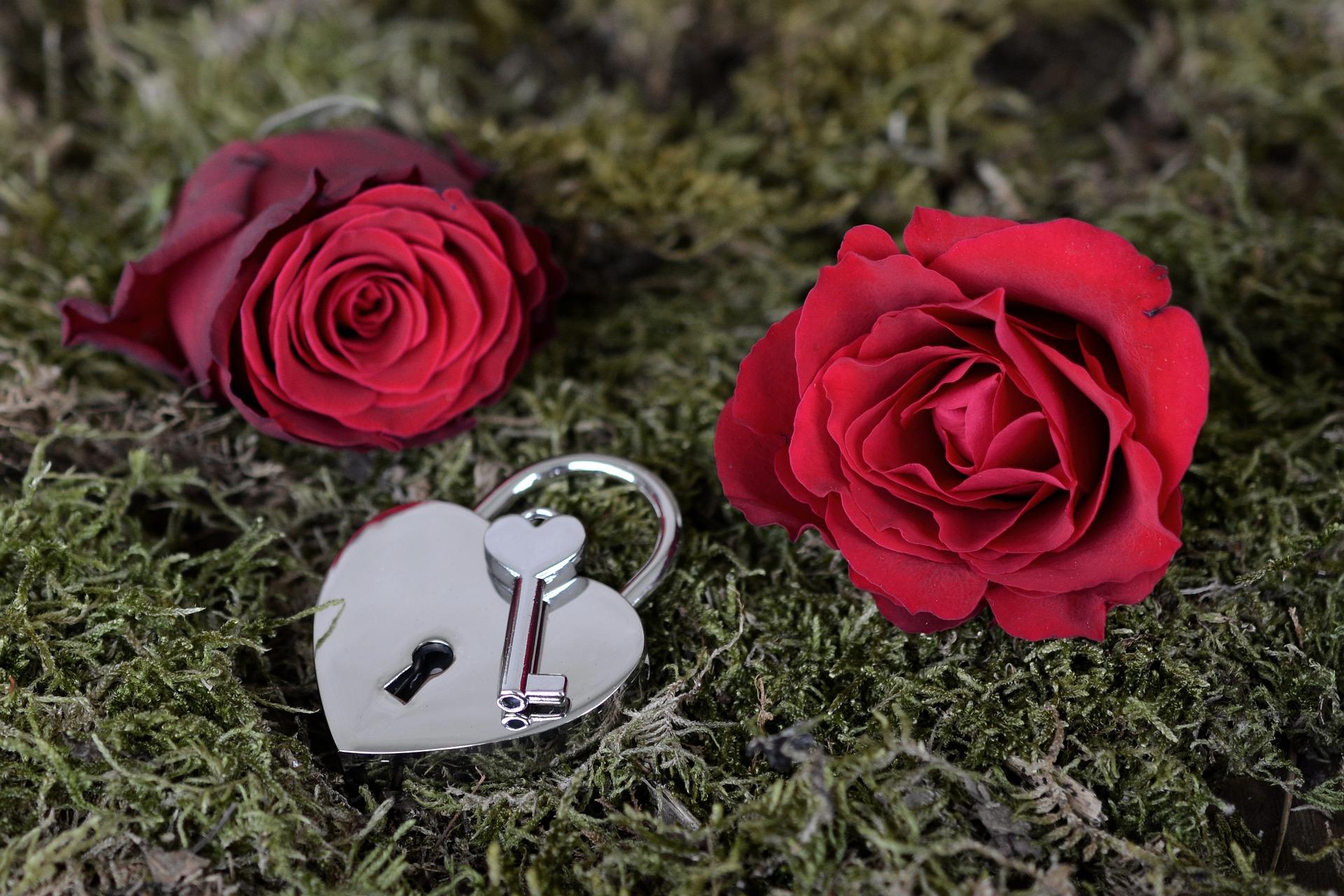 rose-2321513_1920